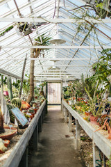 Inside a greenhouse with different plants cactuses