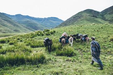 Basotho herdsman walking with a caravan of pack donkeys in the Lesotho highlands