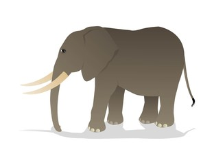 vector illustration of elephant isolated on white background