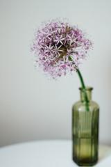 Allium flower in an old bottle