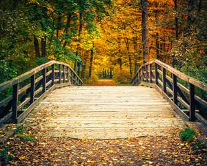Wooden bridge in the autumn forest