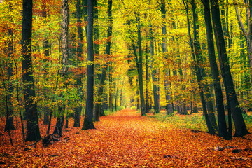 Wall Murals Road in forest Pathway in the autumn forest