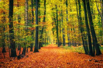 Keuken foto achterwand Weg in bos Pathway in the autumn forest