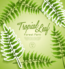 Invitation Card Template with Exotic Tropical Leaves : Vector Illustration