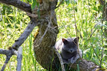 gray cat on a tree