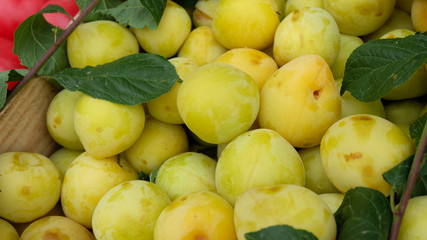 Fresh green and yellow plums