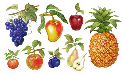 Realistic fruits set.