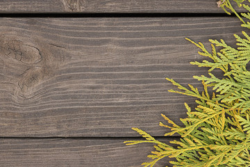 Autumn thuja branches on wooden background.