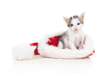 Cute tabby and white baby cat sitting in santa's hat on a white background