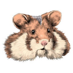 hamster sketch vector graphics head colored drawing