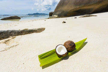 Coconut in the Seychelles