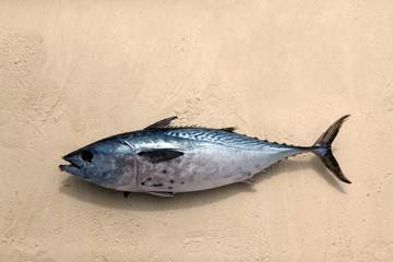 Freshly caught tuna in the sand. Zanzibar, Tanzania