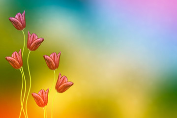 Bright and colorful flowers tulips