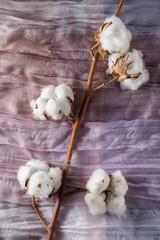 Cotton plant flower branch on purple cloth