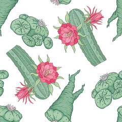 Seamless pattern and background with echinopsis. Stock vector il