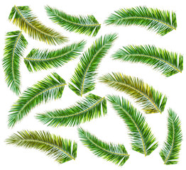 Lot green Palm tree isolated on white background