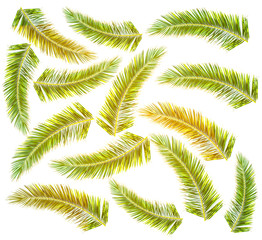 Lot green Palm tree with sun color isolated on white background