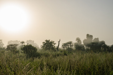 Foggy early morning with sunrise at jungle with palms and lush grass in Gambia, West Africa