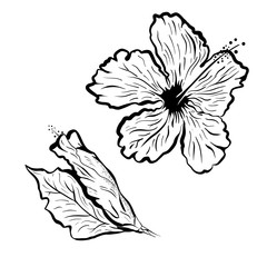 Hibiscus flower in tattoo style. Black and white, graphic tropical flower
