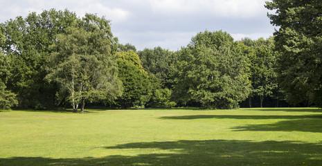 Big trees, green grass, empty landscape