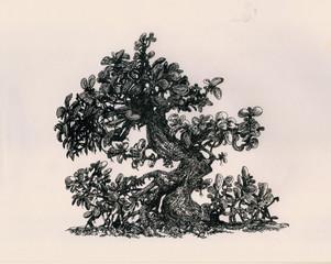Денежное изогнутое дерево.