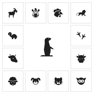 Set Of 13 Editable Animal Icons. Includes Symbols Such As Footprint, Groundhog, Tortoise And More. Can Be Used For Web, Mobile, UI And Infographic Design.
