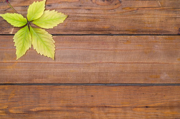 Autumn leaf on a wooden background, free space.
