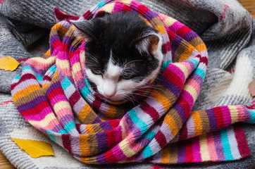 Cat wrapped in warm scarf and autumn leaves.