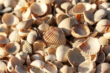 a lot of small shells in one place