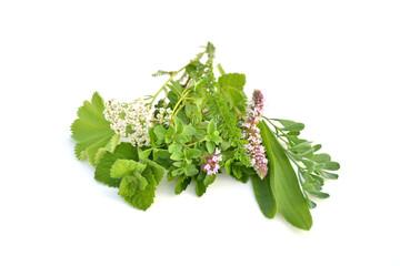 Wall Mural - Fresh green herbs bouquet on white