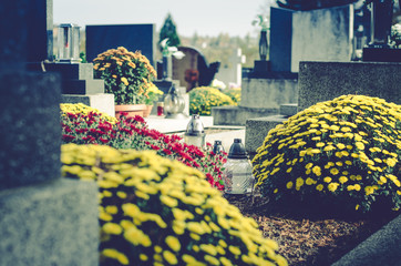 chrysanthemum flowers in cemetery