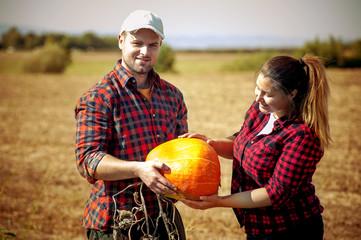 Pumpkin field at harvesting time