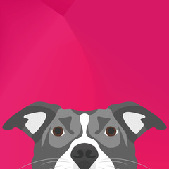 Illustration Dog Pitbull looking over wall