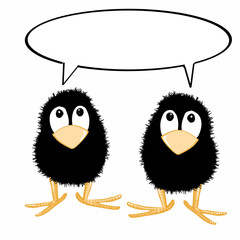 cute crows and speaking