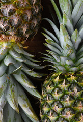 Closeup of two fresh ripe pineapples on a dark wood surface.