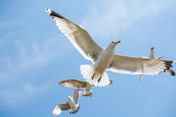 Seagulls flying in a sky