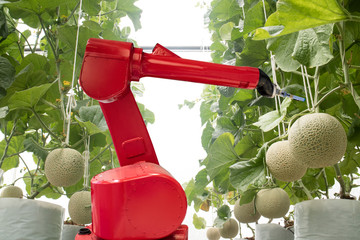 Wall Mural - agritech technology concept, robot use in smart farming or agriculture for aim of improving yield, efficiency, and profitability.it can be products, services or improve various input/output processes.