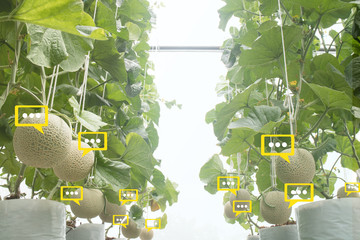 Wall Mural - the bubble chat data the detect by futuristic technology in smart agriculture with artificial intelligence to improving yield, efficiency, and profitability in the farm