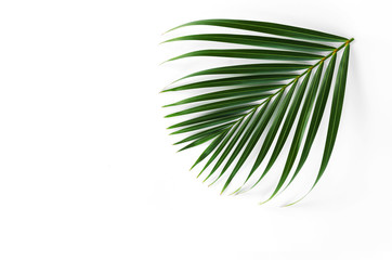 green leaf of palm isolate on white background