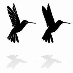 hummingbird silhouette, vector draw