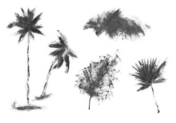 Hand drawn palm tree isolated on white background. 