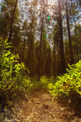 spring forest with a path and sun rays