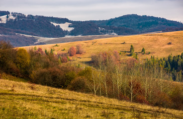 rolling hills with naked forest in autumn under overcast sky