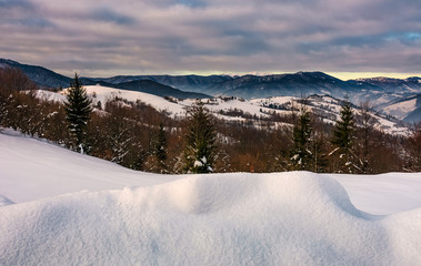 snowy hillsides with forest in mountainous countryside. beautiful morning winter scene