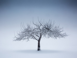 Einsamer Baum im Nebel