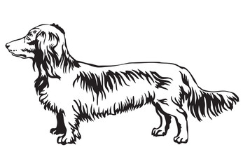 Decorative standing portrait of dog Long-haired Dachshund vector illustration