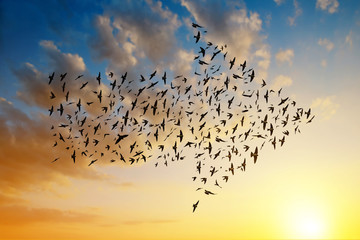 Silhouette of birds flying in arrow formation at sunset sky.