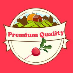 Thin line radish design, Vegetable food banner.