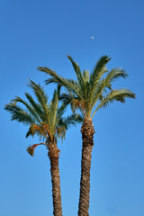 Palm tree on the sky background