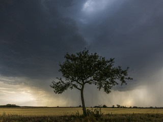 Thunderstorm above a tree.